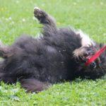 Мэлвин собака из приюта на пристройство приют для бездомных животных Зов Предков zovpredkov.net фото 5