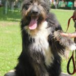 Мэлвин собака из приюта на пристройство приют для бездомных животных Зов Предков zovpredkov.net фото 6