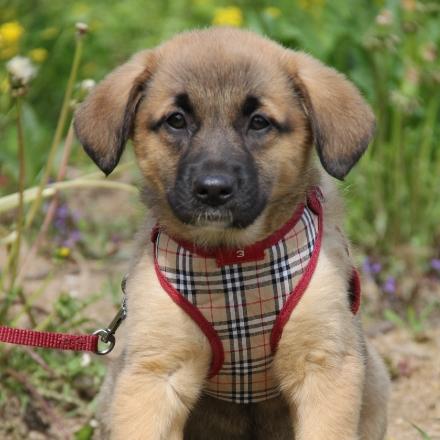 Морошка собака из приюта для бездомных животных Зов Предков на пристройство zovpredkov.net