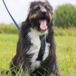 Мэлвин собака из приюта на пристройство приют для бездомных животных Зов Предков zovpredkov.net фото 15