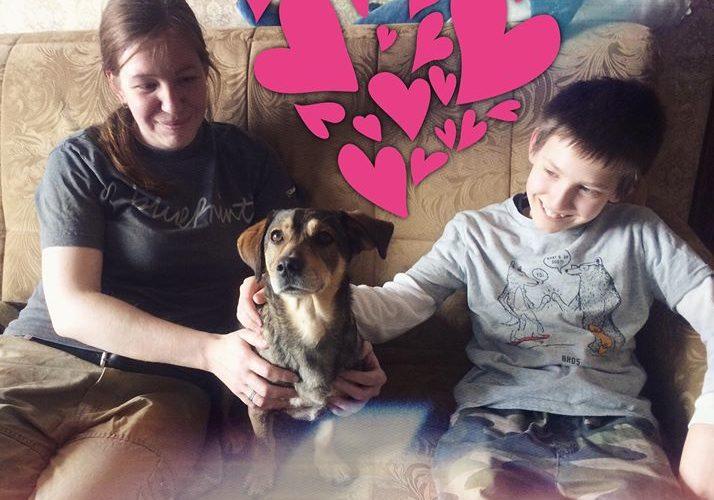 Счастливая история Принглса - собака из приюта Зов Предков пристроена, Принглс нашел хозяев