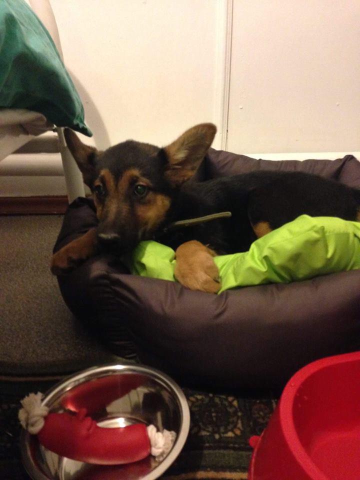 Счастливая история Рябины, собака из приюта для бездомных животных нашла новый дом! приют Зов Предков zovpredkov.net
