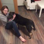 Счастливая история Шона собака из приюта для бездомных животных Зов Предков пристроена Шон нашел свой дом zovpredkov.net