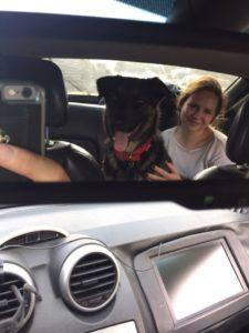 Счастливая история Шона - Шон/Купер дома! собаки из приюта Зов Предков zovpredkov.net