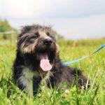 Мэлвин собака из приюта на пристройство приют для бездомных животных Зов Предков zovpredkov.net фото 16