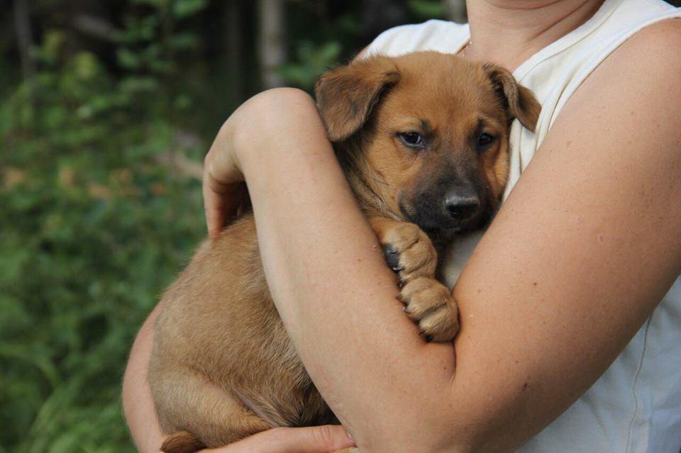 Счастливая история Шафрана из приюта для бездомных животных Зов Предков