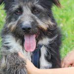 Мэлвин собака из приюта на пристройство приют для бездомных животных Зов Предков zovpredkov.net фото 10