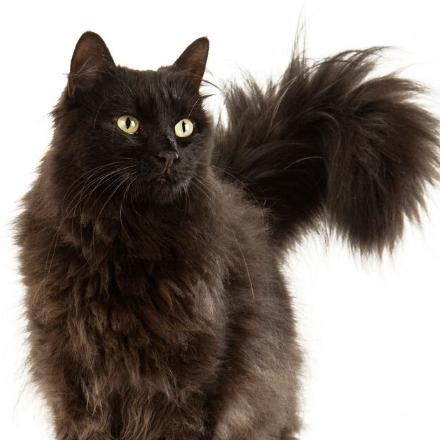 Мамба кошка из приюта для бездомных животных Зов Предков zovpredkov.net кошка на пристройство