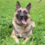 Марта собака из приюта на пристройство, частный приют Зов Предков zovpredkov.net фото 5