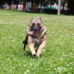 Марта собака из приюта на пристройство, частный приют Зов Предков zovpredkov.net фото 4