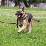 Марта собака из приюта на пристройство, частный приют Зов Предков zovpredkov.net фото 1