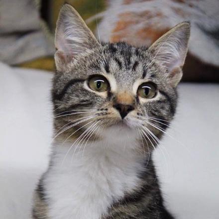 Швепс котенок из приюта zovpredkov.net