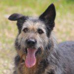Сеня собака из приюта для бездомных животных Зов Предков на пристройство