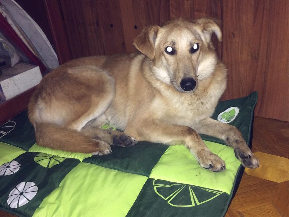 Рэй дома, счастливая история Рэя собаки из приюта для бездомных животных Зов Предков