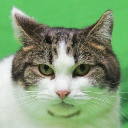 кот Вася из приюта для бездомных животных Зов Предков кот на пристройство