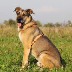 Федор собака из приюта на пристройство, частный приют Зов Предков zovpredkov.net фото 16