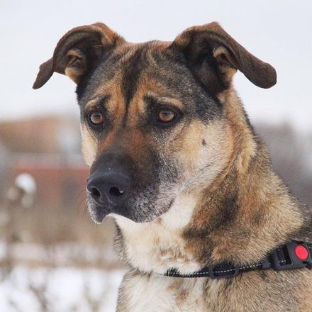 Федор собака из приюта на пристройство, частный приют Зов Предков zovpredkov.net