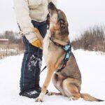 Федор собака из приюта на пристройство, частный приют Зов Предков zovpredkov.net фото 5