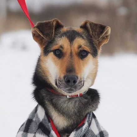 Киви собака из приюта Зов Предков на пристройство , собака даром