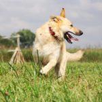 Ирбис собака из приюта на пристройство приют для бездомных животных Зов Предков zovpredkov.net фото 7
