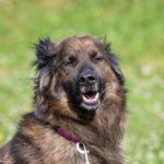 Гарри собака из приюта Зов Предков zovpredkov.ru фото 1