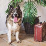 сальса собака из приюта на пристройство фото2