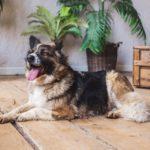 сальса собака из приюта на пристройство фото4