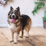 сальса собака из приюта на пристройство фото5