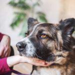 сальса собака из приюта на пристройство фото7