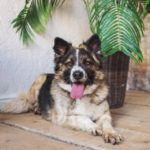 сальса собака из приюта на пристройство фото1