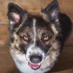 сальса собака из приюта на пристройство фото6