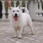 Матильда собака из приюта на пристройство фото5