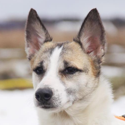 """Фишка собака из приюта  для бездомных животных """"Зов Предков"""" собака на пристройство"""