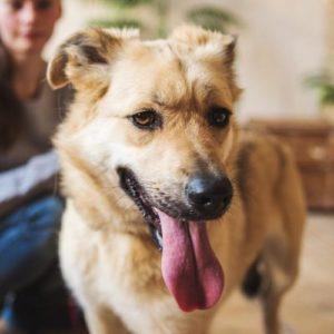 Клюква собака из приюта на пристройство, собака из приюта для бездомных животных Зов Предков на пристройство