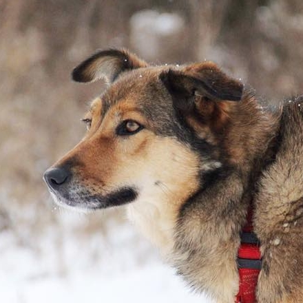 Лилу собака из приюта на пристройство