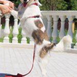Луна собака из приюта на пристройство Зов Предков zovpredkov.net фото 5
