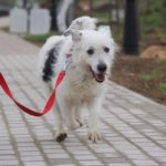 Матильда собака из приюта на пристройство фото2