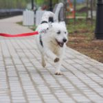 Матильда собака из приюта на пристройство фото3