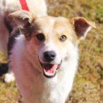 Луна собака из приюта на пристройство Зов Предков zovpredkov.net фото 7