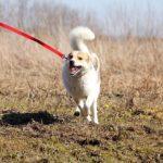 Луна собака из приюта на пристройство Зов Предков zovpredkov.net фото 11