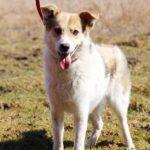 Луна собака из приюта на пристройство Зов Предков zovpredkov.net фото 12