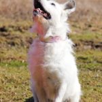 Матильда собака из приюта на пристройство фото10