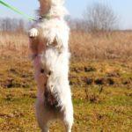 Матильда собака из приюта на пристройство фото7
