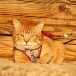 Руби кот из приюта на пристройство zovpredkov.net фото11