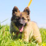 Гаврик щенок из приюта на пристройство zovpredkov.net фото5