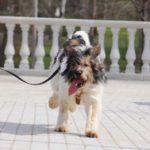 Барт собака из приюта на пристройство zovpredkov.net фото2