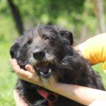 Шанель собака из приюта на пристройство Зов Предков zovpredkov.net фото 12