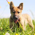 Линд щенок из приюта на пристройство zovpredkov.net фото5