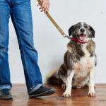 Сережа собака из приюта на пристройство zovpredkov.net фото4
