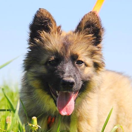 Гаврик щенок из приюта Зов Предков на пристройство zovpredkov.net